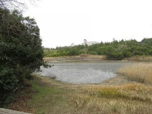 葛西臨海公園 下の池