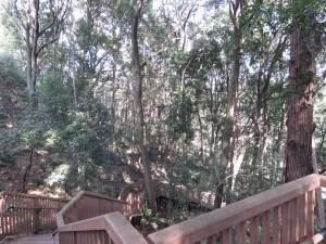 東高根森林公園 (6)