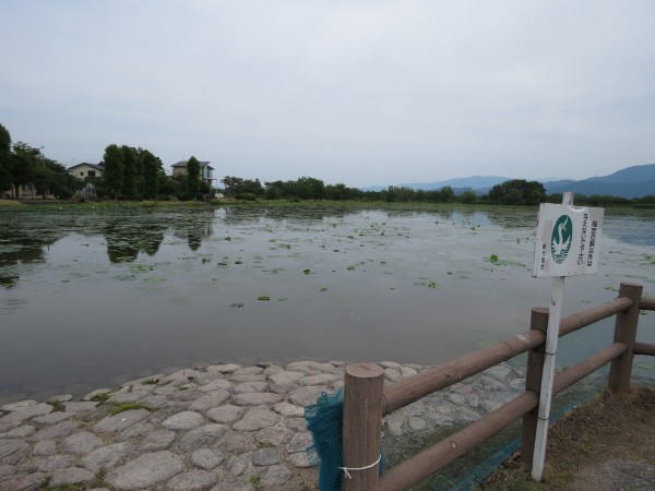 瓢湖 (17)