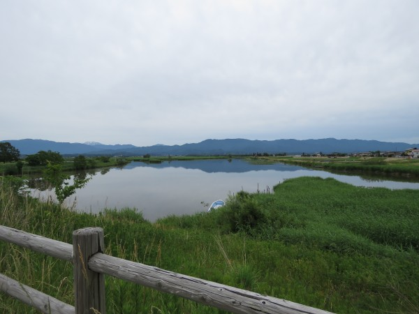 福島潟 (11)