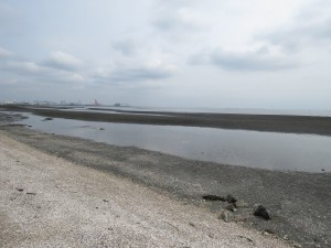 三番瀬海浜公園 (3)