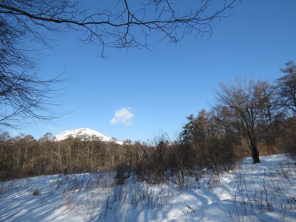 軽井沢野鳥の森 アカゲラ休憩所付近