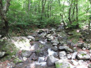 栃木県民の森 (3)