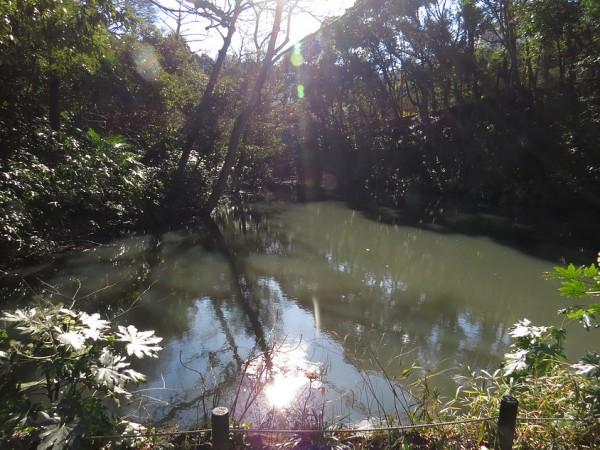 自然教育園 (3)
