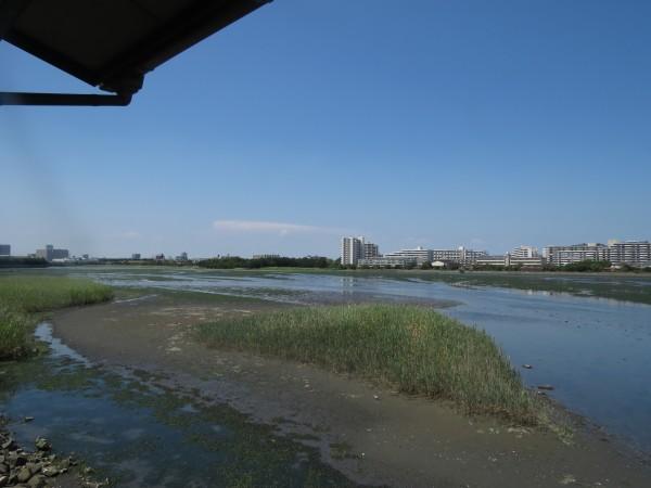 谷津干潟 (3)