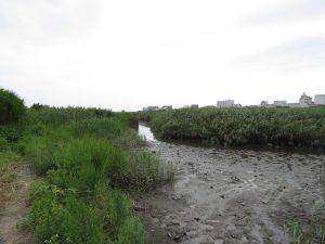 多摩川六郷橋緑地 (7) 干潟