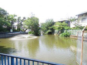 池上本門寺 弁天池