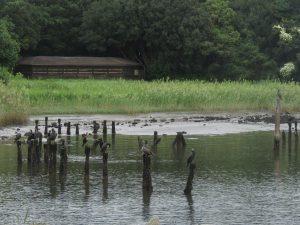 大井ふ頭中央海浜公園 干潟