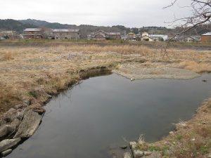 太田川 カワセミの撮影スポット