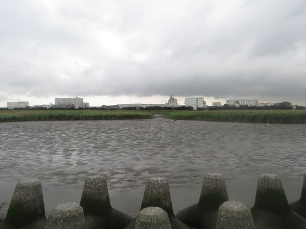 六郷橋緑地 干潟