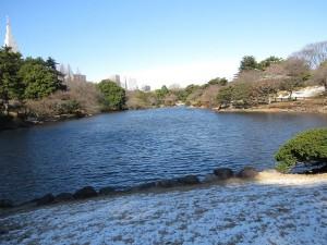 東京都 冬 カモ類 探鳥地 新宿御苑