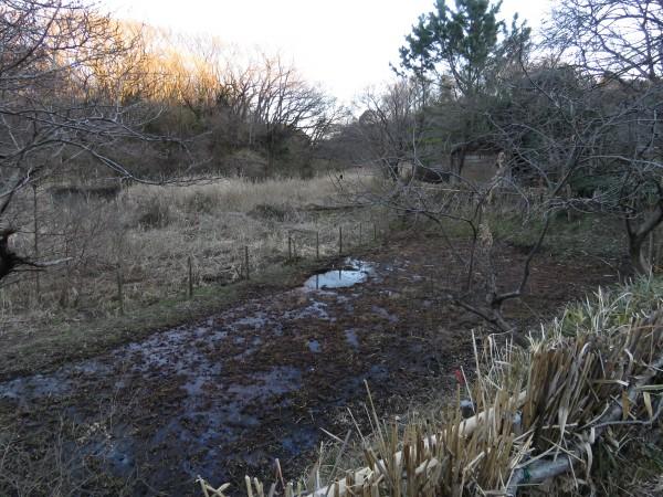 舞岡公園で見られる野鳥と観察ポイント