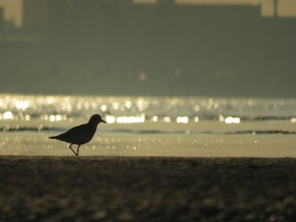 ダイセン 逆光 三番瀬海浜公園