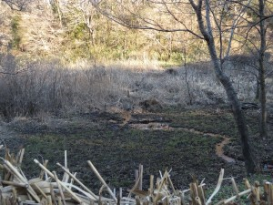 タシギの生息地 舞岡公園