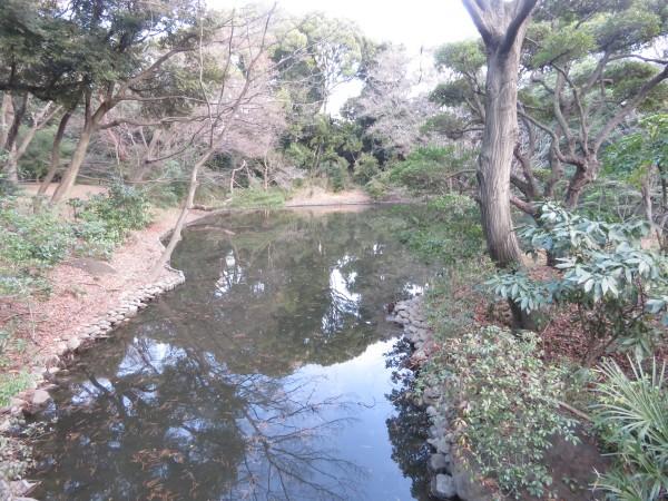 北池 明治神宮 冬の猛禽類の観察におすすめの探鳥地