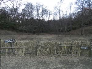 ヤマシギの場所 舞岡公園
