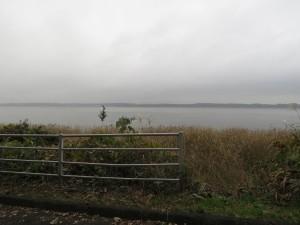 タゲリの生息地 涸沼