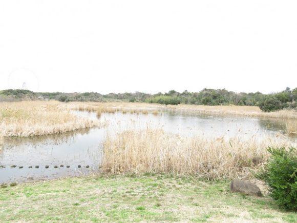 上の池 葛西臨海公園
