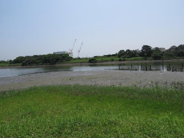 キアシシギの生息地 東京港野鳥公園