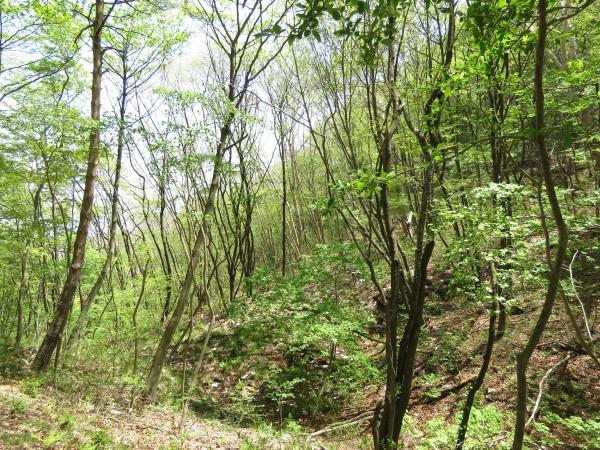 伊香保森林公園 センダイムシクイの生息地