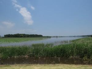 カオジロガビチョウの生息地 多々良沼