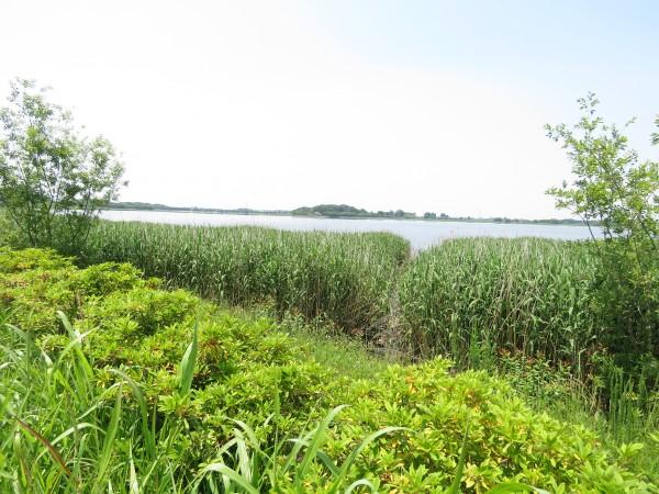 オオヨシキリの生息地 多々良沼