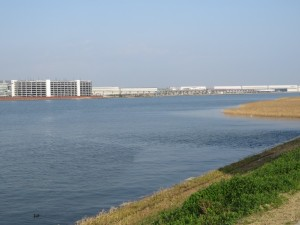 カンムリカイツブリの生息地 多摩川河口付近
