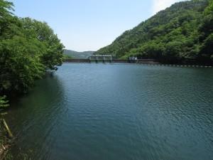 妙義湖 ヤブサメ