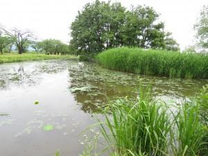 瓢湖 (16)