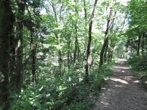サンコウチョウの生息地 秋葉公園