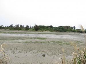 豊崎干潟 沖縄県 クロツラヘラサギ