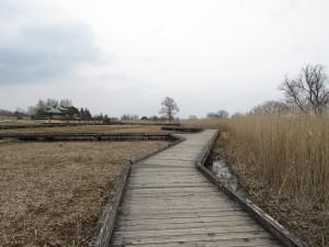 クイナの生息地 霞ヶ浦総合公園