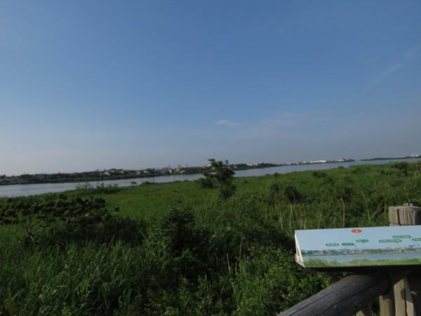 鳥屋野潟 (1)