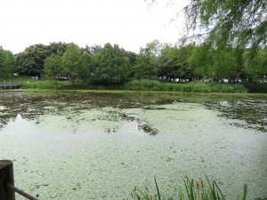 鳥屋野潟 (4)