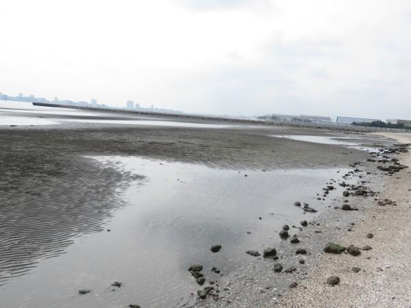 三番瀬海浜公園 (2)