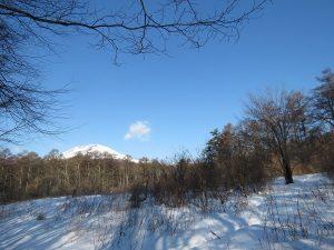 軽井沢野鳥の森 ルリビタキの生息地