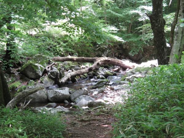 栃木県民の森 ミソサザイ