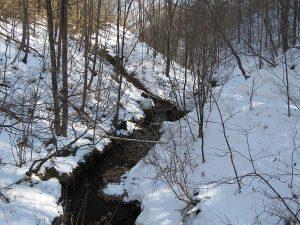 軽井沢野鳥の森 小川