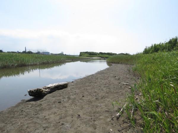 小櫃川河口
