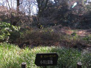 自然教育園 (2)