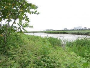 シギチドリ 渡り 河川