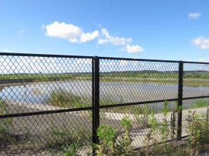 シギチドリ 渡り 貯水池