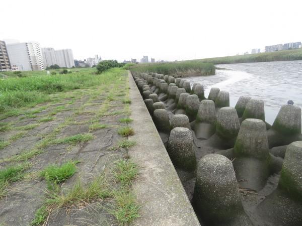 干潟 多摩川六郷橋緑地 テトラポッド