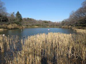 アオゲラの生息地 三ッ池公園