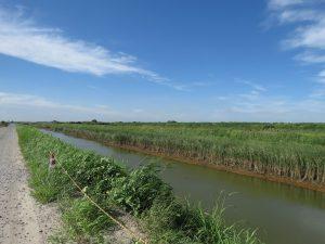北新田 排水路 (2)