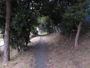 京浜島緑道公園 つばさ公園の野鳥