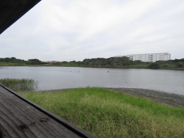 東京港野鳥公園 2号観察小屋