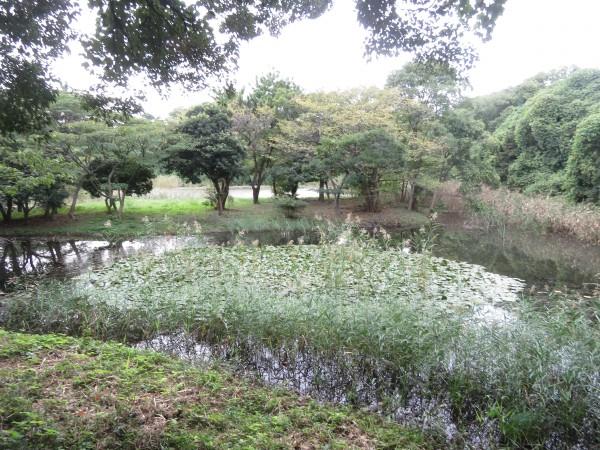 東京港野鳥公園3号観察小屋