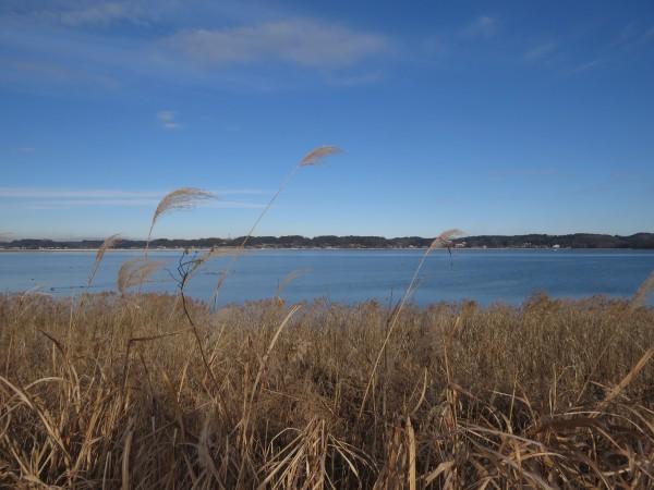 冬の猛禽類の観察におすすめの探鳥地 涸沼