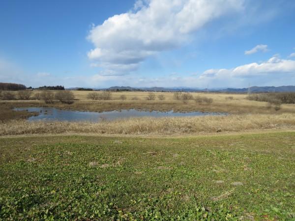 冬の猛禽類の観察におすすめの探鳥地 渡良瀬遊水地